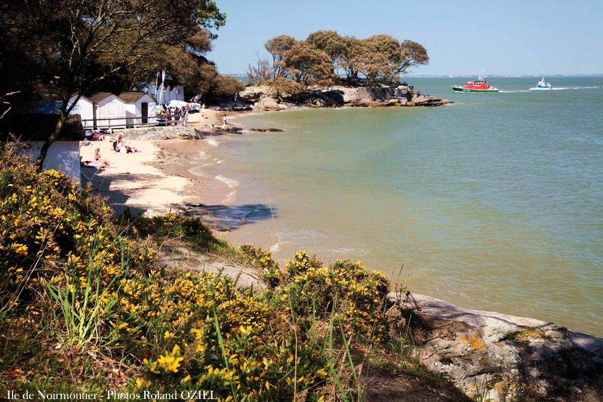 Bois de la chaize ile de Noirmoutier
