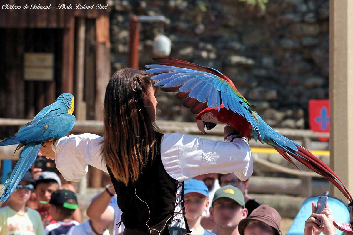 parc de loisirs : le château de Talmont spectacle oiseaux